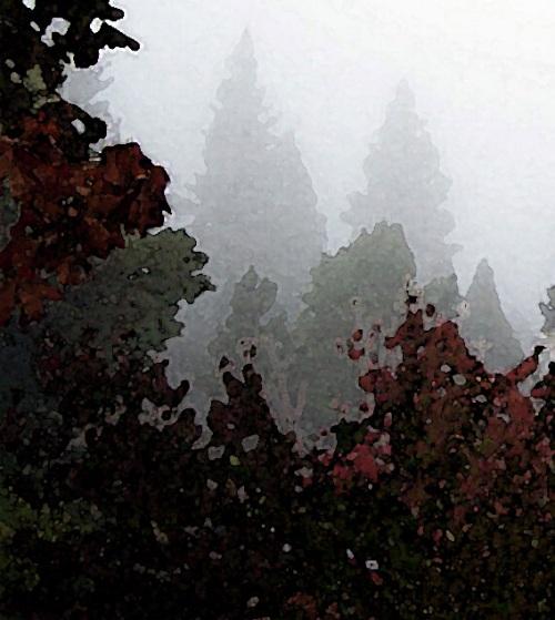 Yesterday's fog heralded today's storm ...