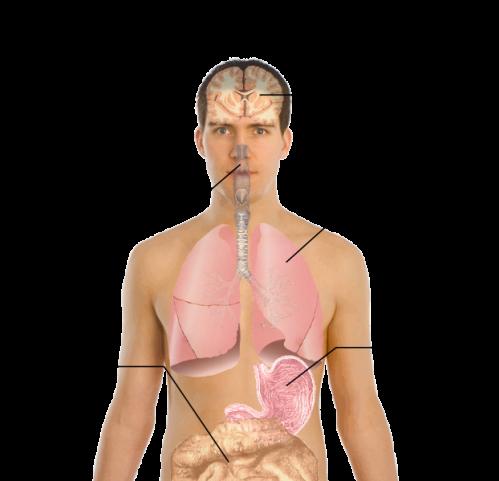symptoms_of_swine_flu_svg