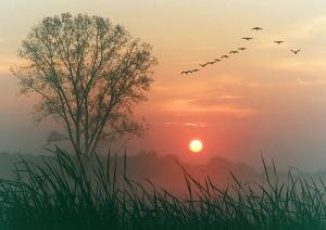 autumndawn