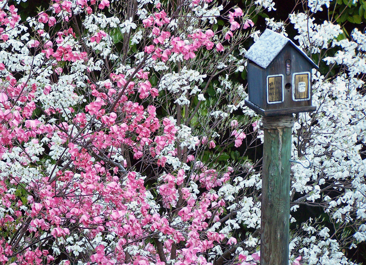 Winter Isnt Over Till Its Over >> Snow On The Dogwoods Rheumablog