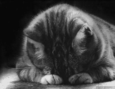 I haz the sad.