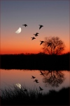 WildGeese