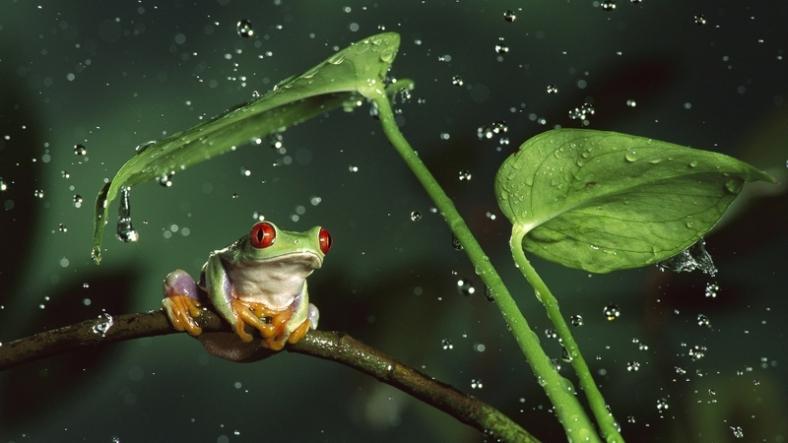 This frog and I like the rain.