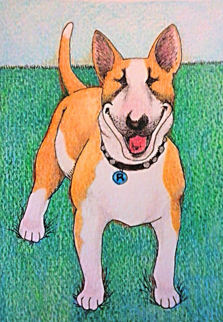 Rocky is Jami's beloved, goofy, most amazing bull terrier in the world. He's getting up there in years (sort of like Stallone) but he's enjoying a second puppyhood at the moment. Go Rock! The drawing was done with watercolor pencils, colored pencils, and ink on watercolor paper.