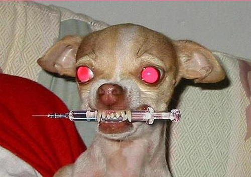crazy-drugs-dog